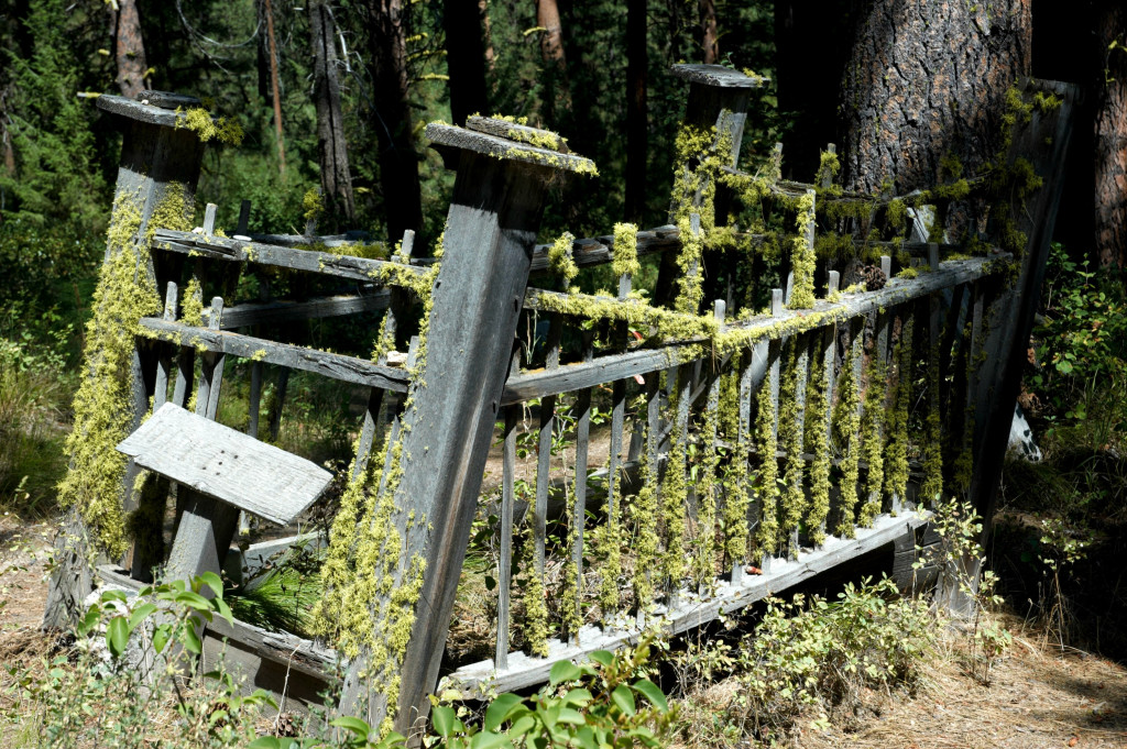 IDAHO CITY PIONEER CEMETERY (unknown)
